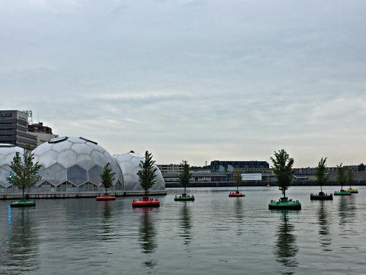 Rotterdam: Schwimmender Wald