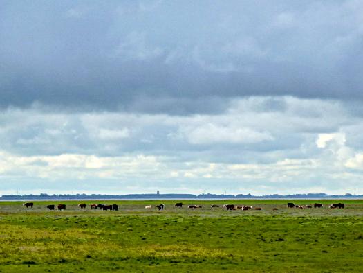 Polder - das flache Land von Ameland