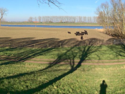 Weites Land und windgeschützte Pferde - an der Bergschen Maas
