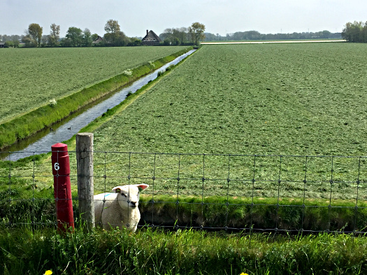 Flaches Land hinterm Deich - Polder in Nordholland