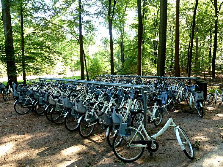 Weiße Fahrräder Hoge Veluwe