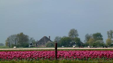 Tulpen in Nordholland