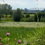 Adventskalender speciaal – Türchen 1: Durch den Ooijpolder